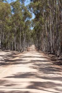 A dusty road in the Australian outback