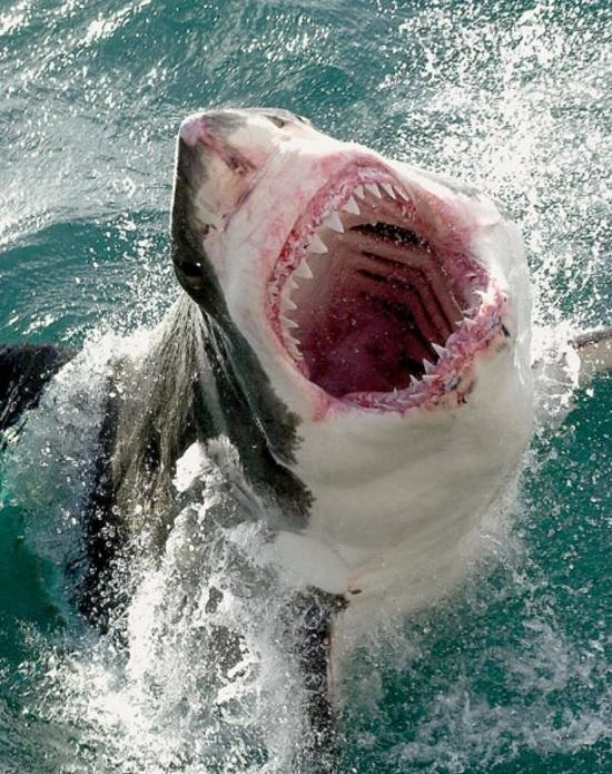 Scary animal attack pictures - photo#40