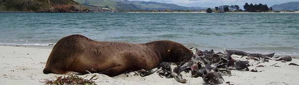 Seal and Dunedins Wildlife